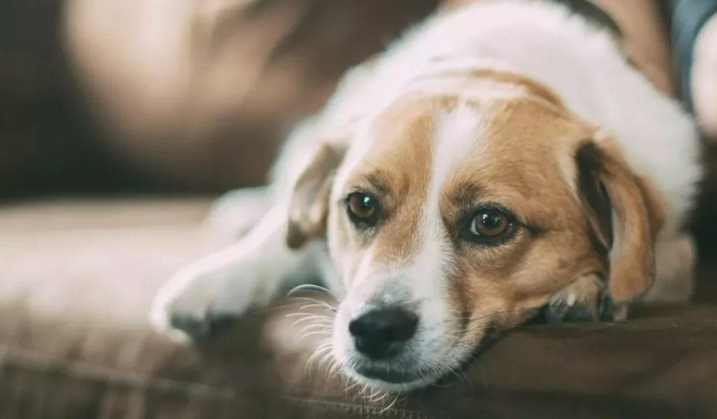 усыпление собак на дому