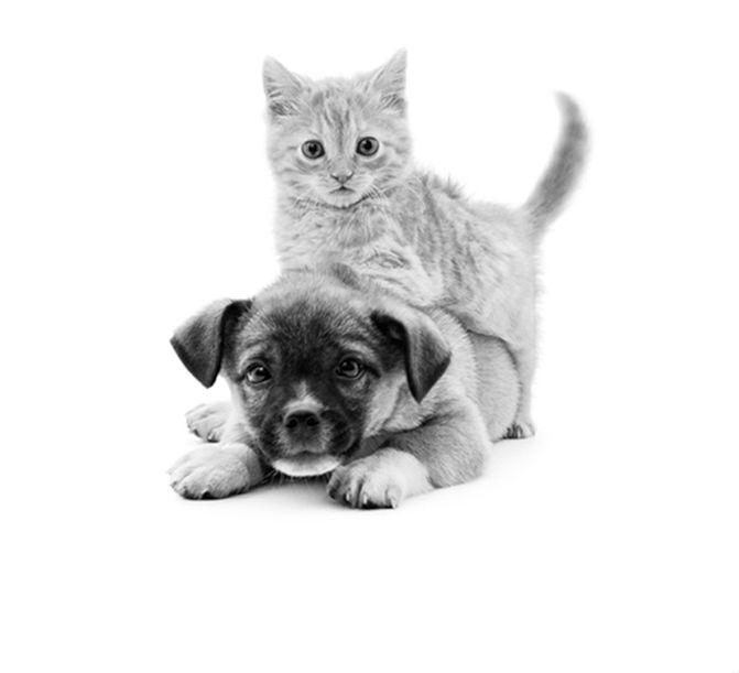 Усыпление домашних животных и кремация