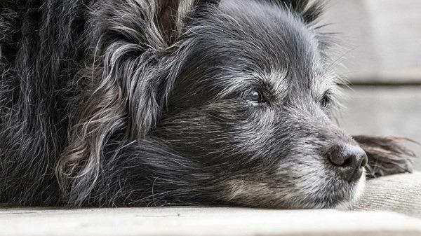 прощание с животным, эвтаназия