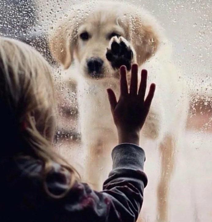 Нужно попрощаться с животным