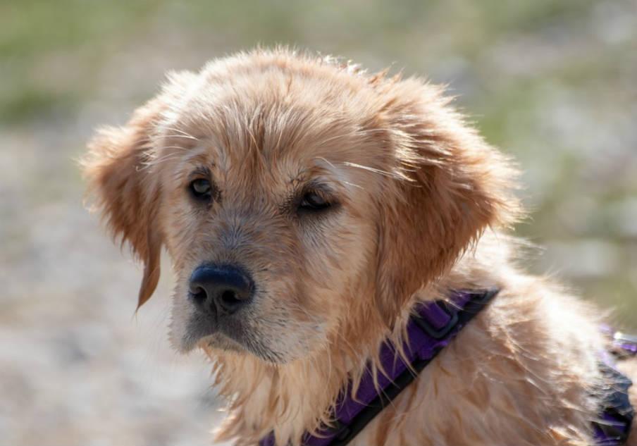 усыпить собаку самому или ветеринар