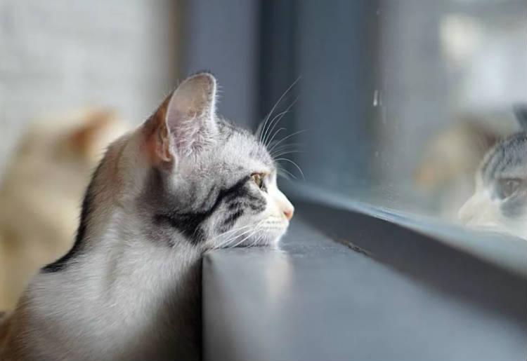 где лучше усыпить кошку?