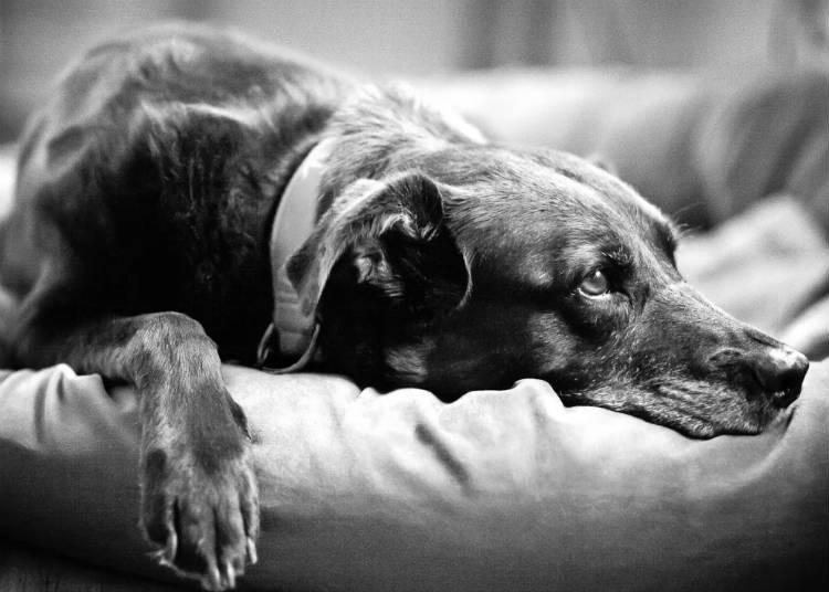 где лучше усыплять животных на дому или в клинике