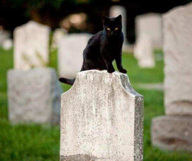 где хоронить кота кошку