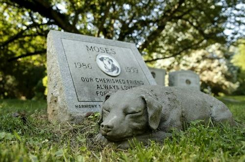 как похоронить собаку