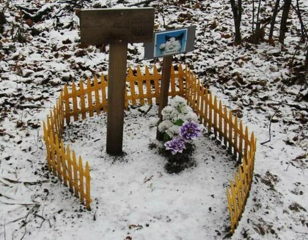 как похоронить кота зимой