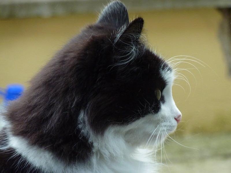 гуманное усыпление кота